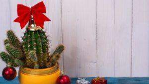 Christmas cactus tree.